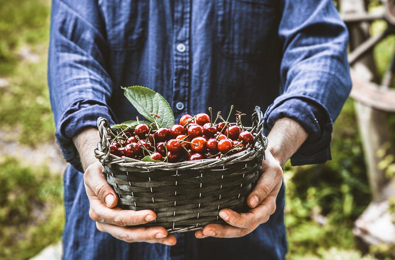 frukt i bokashi