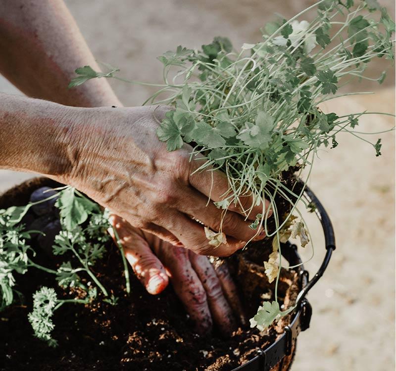 odla i jord